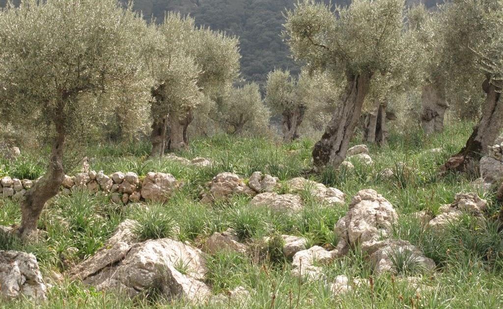 Uep excursi alar solleric refugi tossals verds alar - S olivaret casa de colonies d alaro ...