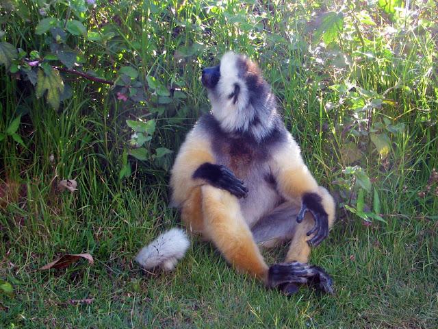 صور من مدغشقر Madagascar 14703649327