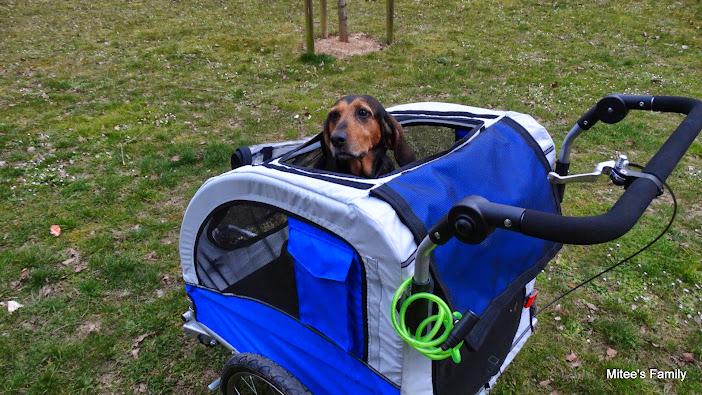 Modes de transport pour petits / vieux chiens qui fatiguent vite - Page 3 DSC02415