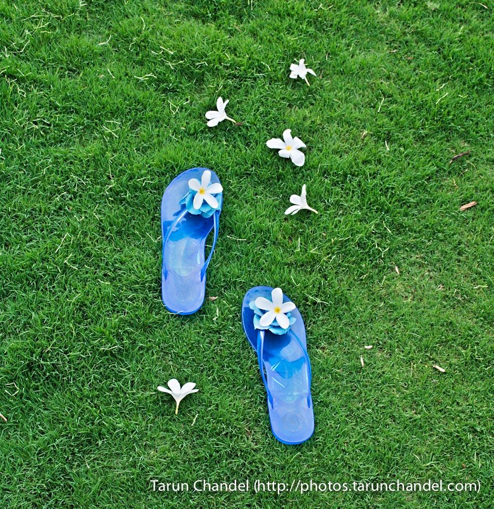 Flowery Steps, Tarun Chandel Photoblog