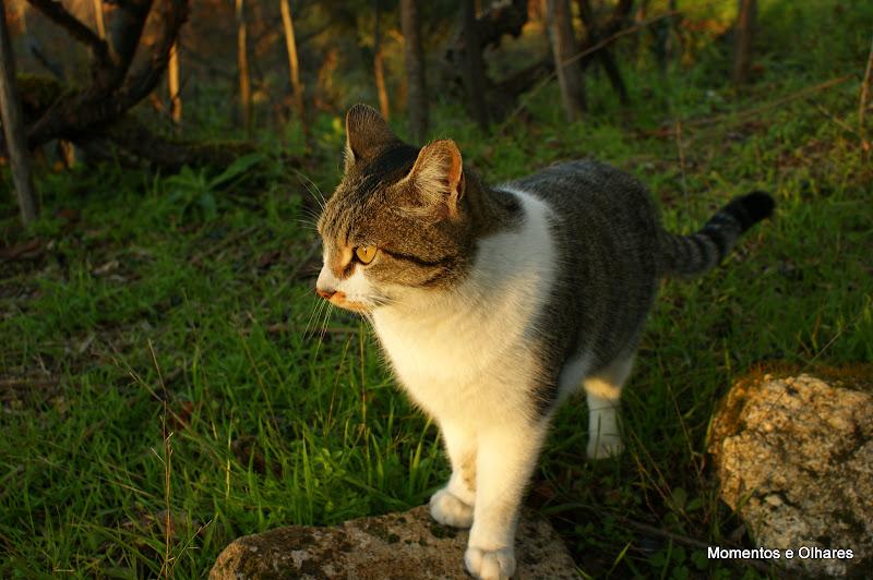 O Gato da Póvoa Dão, Viseu