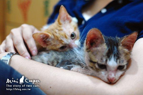 2cats ★ 第一次有媽媽的感覺 Mini & Cooper