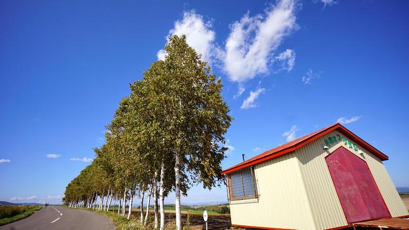 美瑛 セブンスターの木 写真3