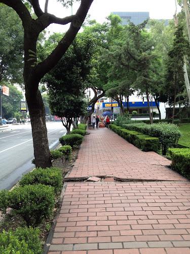 Tree sidewalk