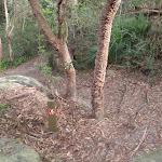Plenty of nice trees (63872)