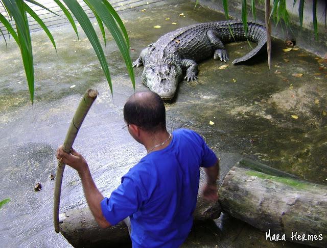 Questões e Fatos sobre Crocodilianos gigantes: Transferência de debate da comunidade Conflitos Selvagens.  - Página 3 Alcino%25204%252C2m