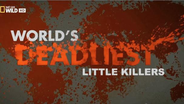 Asesinos diminutos [Los depredadores m�s letales del mundo][HDTV 720p][Espa�ol][2013]