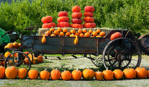 Where to Get Your Perfect Pumpkin