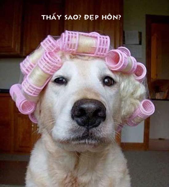 Ảnh chú chó làm đẹp thật ngộ nghĩnh