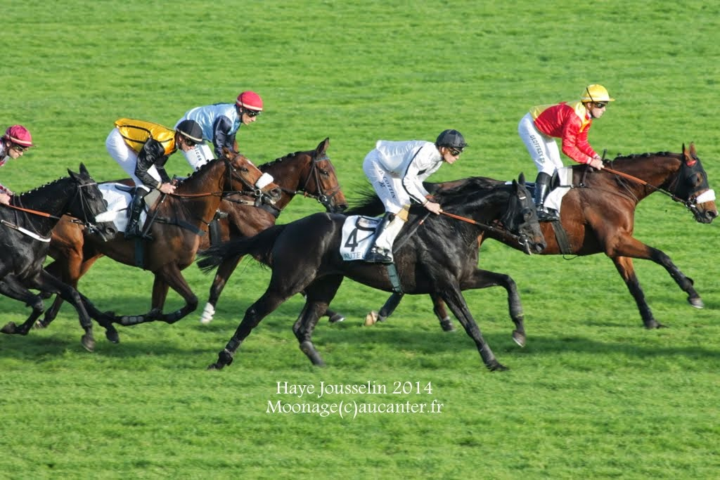 Photos Auteuil 2-11-2014 (48h de l'obstacle) IMG_5634