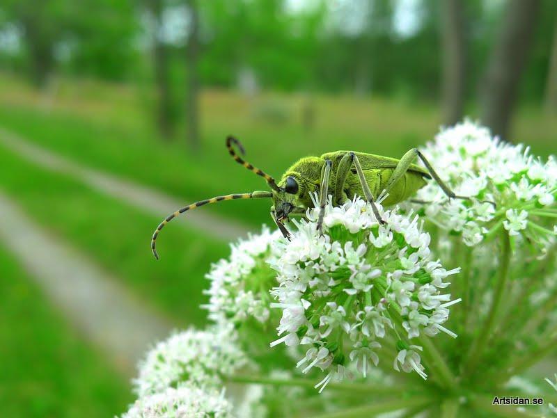 Grön blombock
