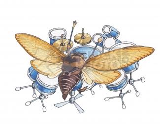 moth%2Bdrumming.png