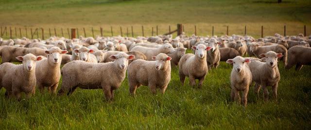 may áo bằng da cừu xịn