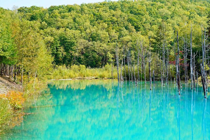美瑛 青い池 写真2
