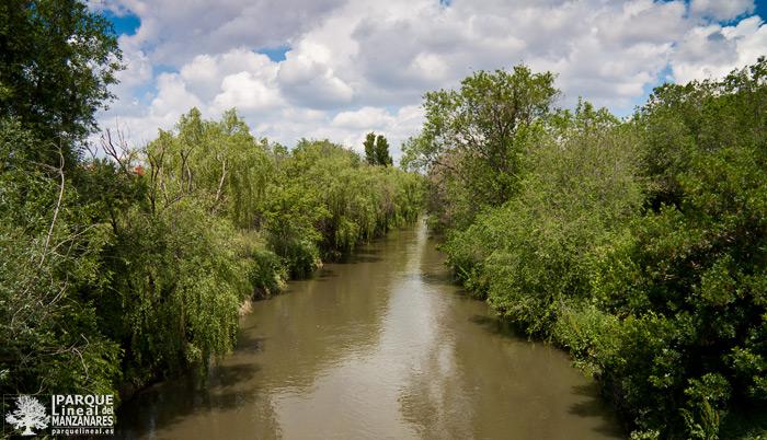 bosque de galería en el tramo 2 del parque lineal del manzanares