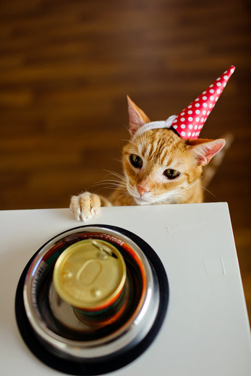 Happy Birthday Cats.