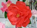 赤色 立ち弁の八重〜牡丹咲き 極大輪