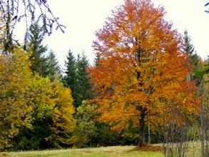 ősz a Gyilkos tónál