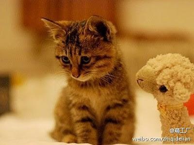 'گربه های ناز