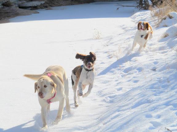 Daisy, Boulder, and Torrey running