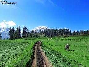 Road to Lalazar Naraan..