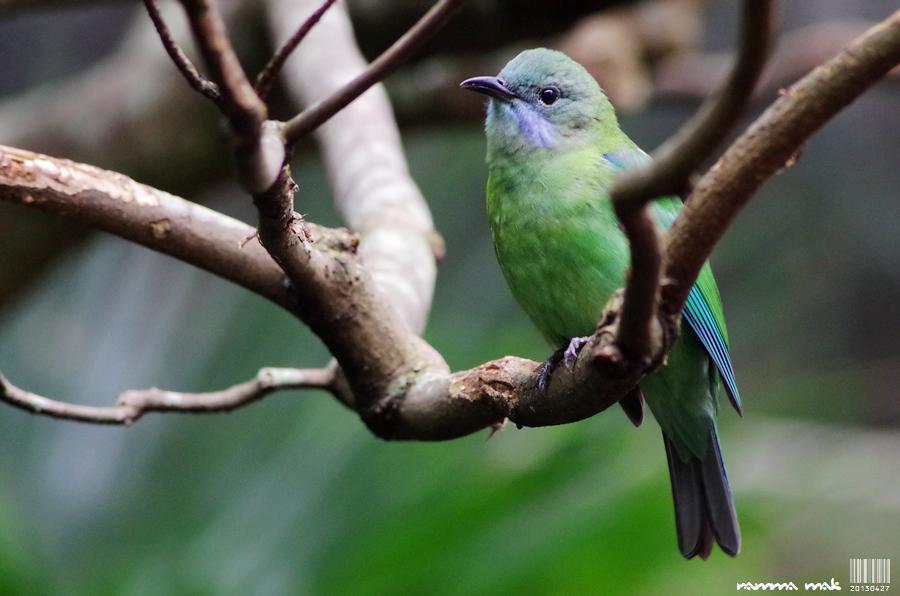 牠身上的緑色很美麗!