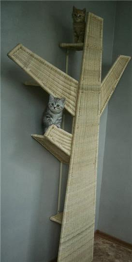 лазалки для кошек