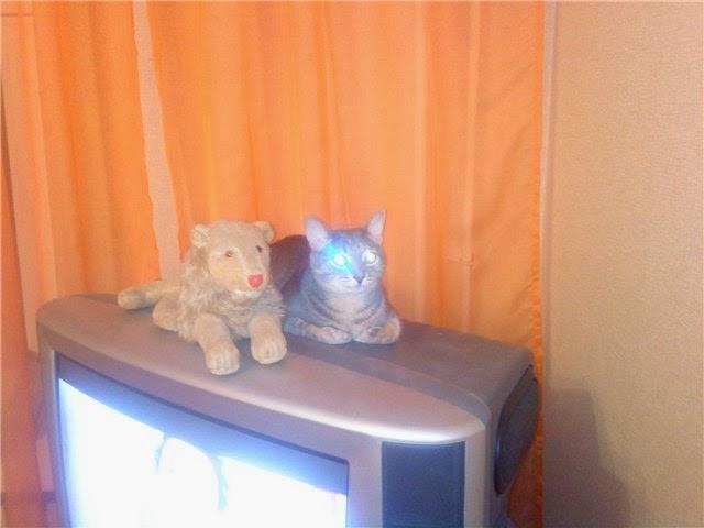cat, моя семья, фото