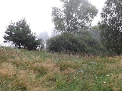 Mgła mglisty poranek las łąka łąki spacer z synem Panorama LeSage Darłowo Las pajęczyny rosa romantycznie kwiaty