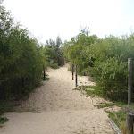 Sandy track towards Redhead Beach in Redhead (391229)