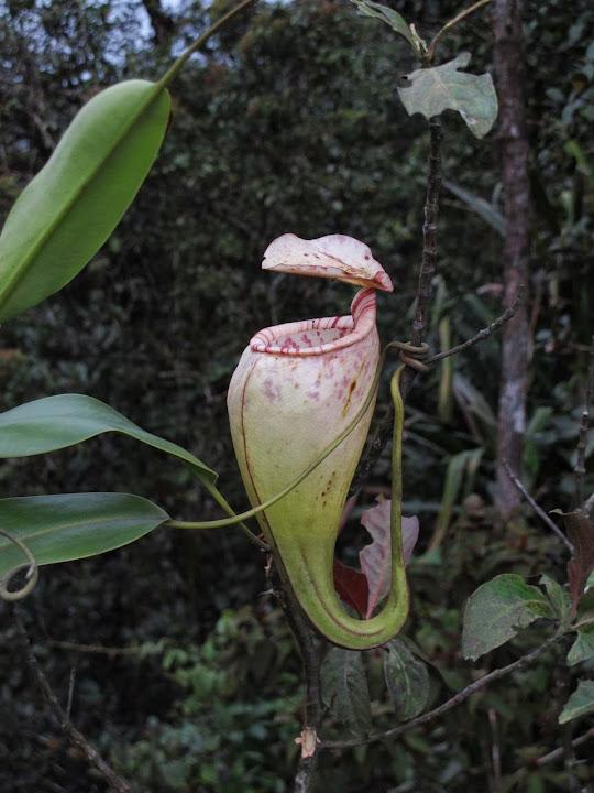 Borneo%25202014%2520extra%25201-10.jpg