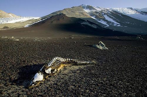 8 - Vales Secos De Mcmurdo - Antártida