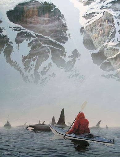 ORCAS AND KAYAKER.jpg