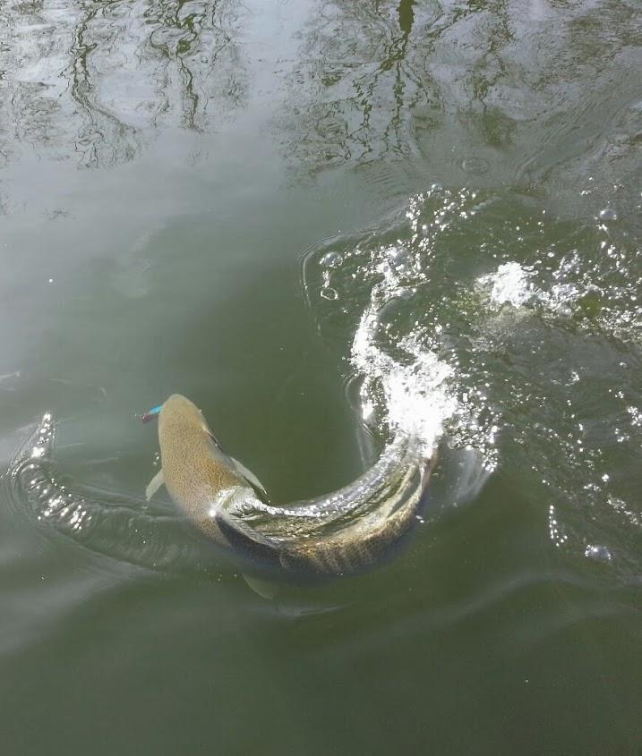 Plug Fishing for Steelhead