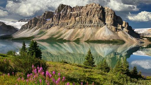 Bow Lake Bouquet, Canadian Rockies, Alberta, Canada.jpg