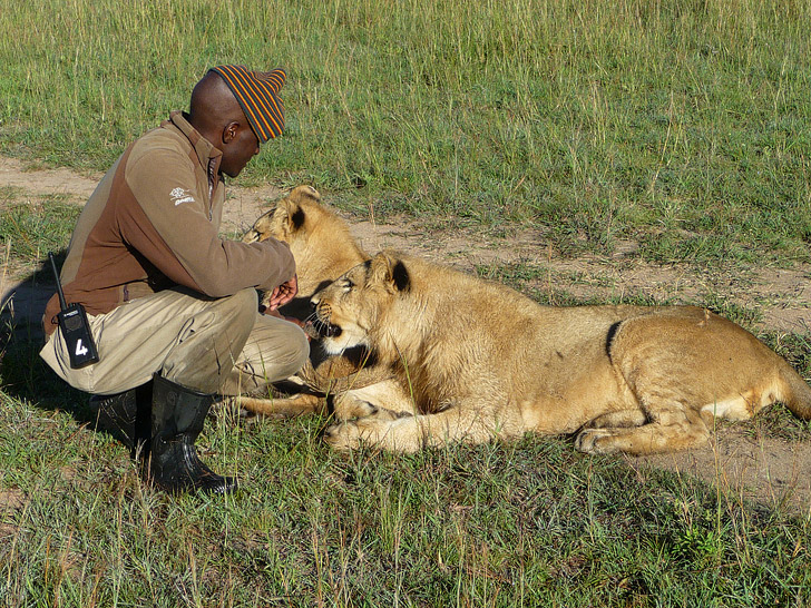 Walk with Lions in Zimbabwe (Top Travel Destinations 2015).