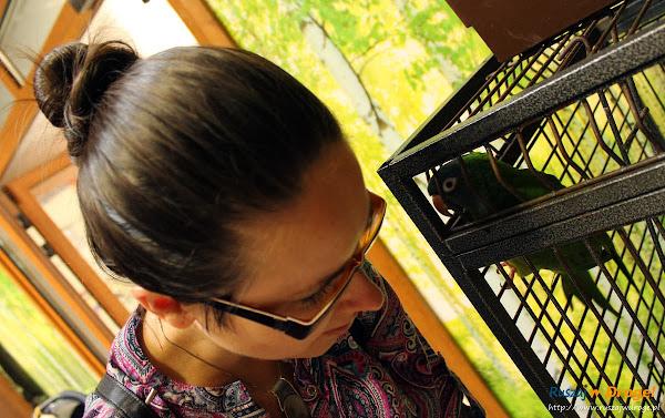 Tuchlino Park Egzotycznych Zwierzaków - Kasia uczy papugę Cody mówić