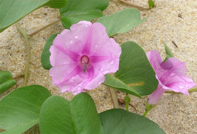 hoa muong bien