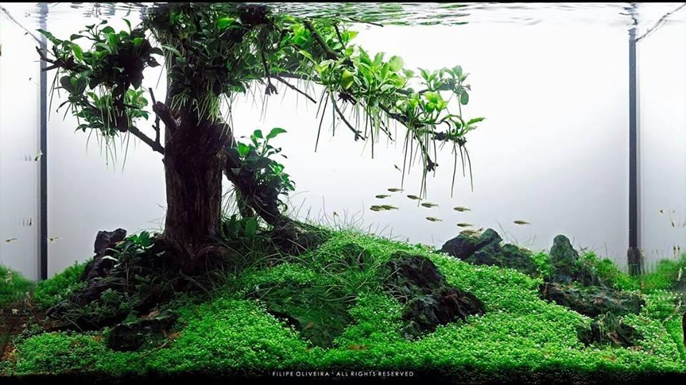 Bộ sưu tập hồ thủy sinh bon sai không dùng rêu
