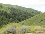 Sobaranes Canyon Trail - emerged from redwood forest