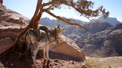 It's a long and sometimes steep climb. Hiring a donkey can be helpful