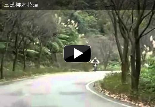 三芝櫻木花道