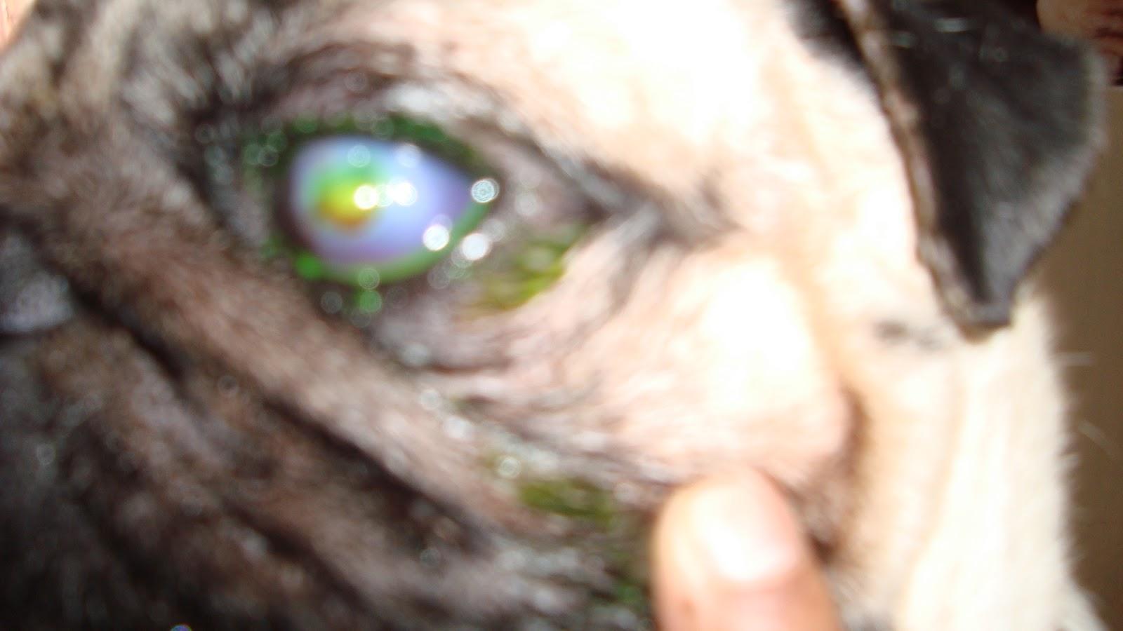 Geetasharmavet Dye Fluorescein Test For Corneal Ulcer