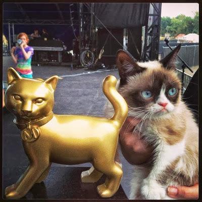 Catsparella: grumpy cat