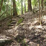 Steep track north of Wollombi Brook Pool (364619)