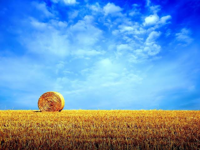 Harvest,Amazing Wallpapers