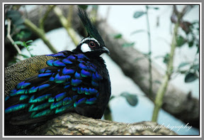 Exotic Bird, confining his Colors and feathers, Bronx Zoo, New York
