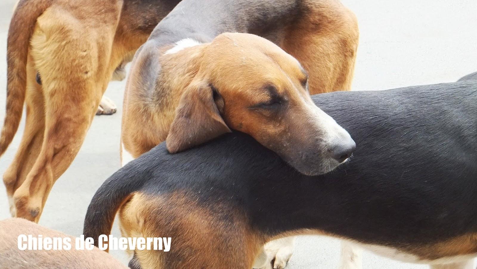 Perros de caza, soupe de chiens, Cheverny, Elisa N, Blog de Viajes, Lifestyle, Travel