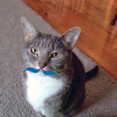 Mustache kitty