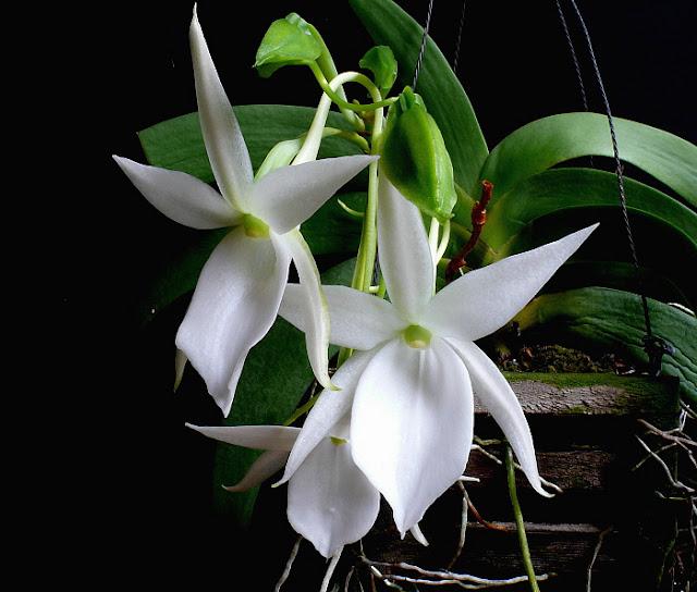 Растения из Тюмени. Краткий обзор P1030752